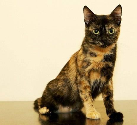 Какое потомство от черной кошки и рыжего кота