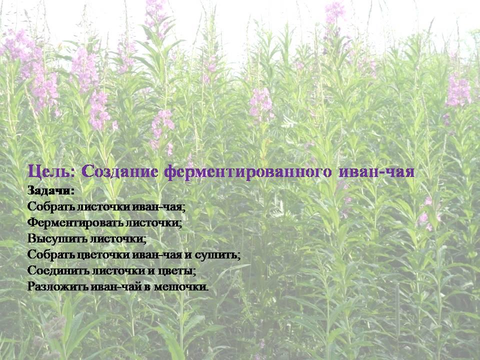 image-20200711011126-15.jpeg
